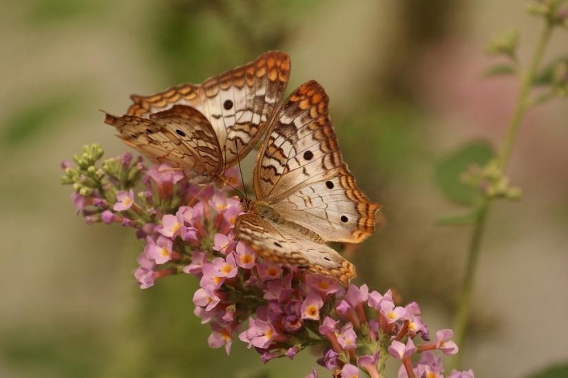Sobre mi contacto mariposas